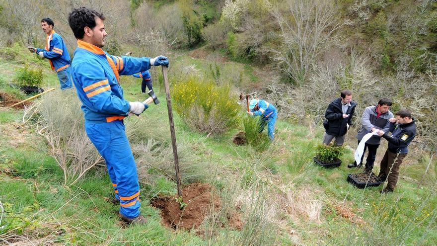 Fundación Oso Pardo planta más de 100.000 árboles para alimento de este especie, que supera los 230 ejemplares