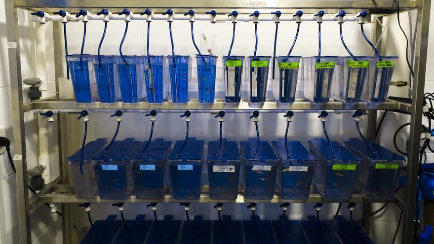 La CE registra una iniciativa para prohibir ensayo de cosméticos en animales