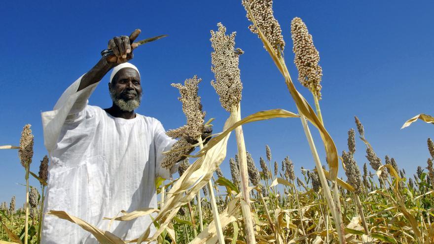 El desperdicio de cereales impacta especialmente sobre el suelo y el agua. / ONU: Fred Noy