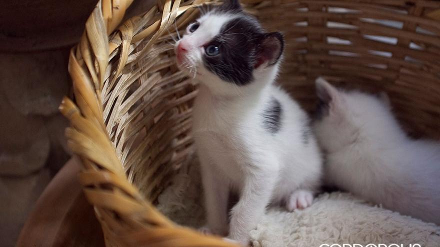 Dos gatos en una cesta.