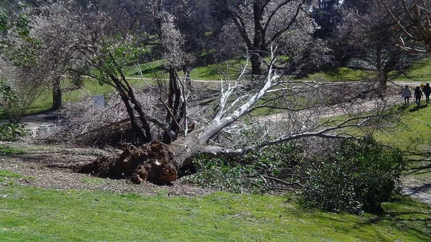 Un niño muere en el Retiro tras caerle encima un árbol a causa del viento