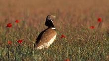 Castilla-La Mancha busca voluntarios para contar aves en primavera