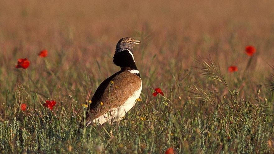 FOTO: Seo/BirdLife
