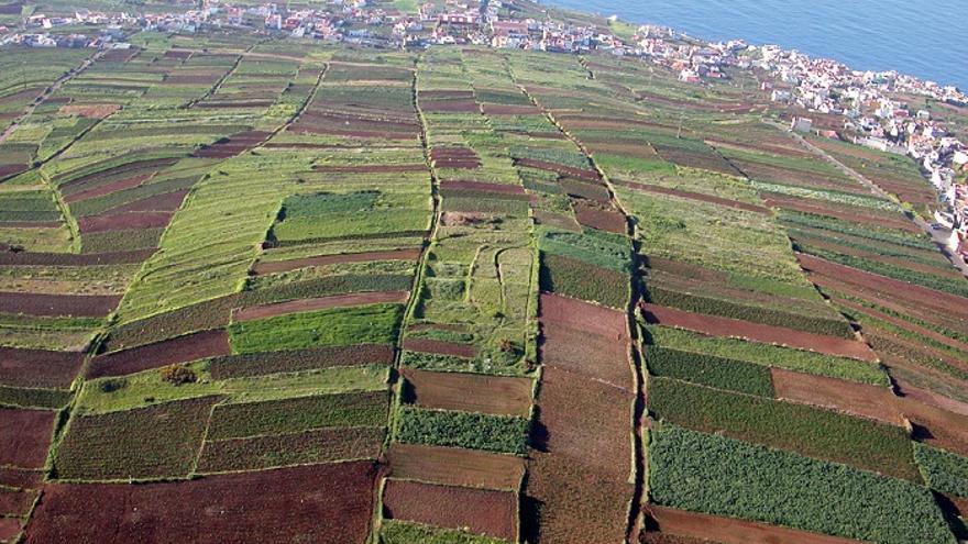 Campo con cultivos en Los Realejos, en Icod el Alto y en una imagen de archivo