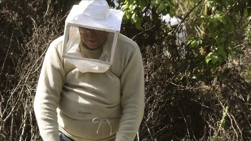 El ácaro que mata a las abejas se vuelve inmune a los pesticidas
