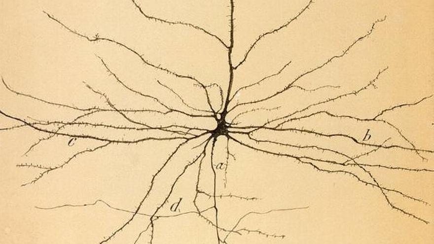 Neurona, dibujo de Santiago Ramón y Cajal, 1899.