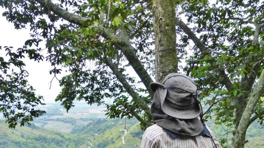 En muchas zonas del Cauca es habitual sembrar en la montaña, en agudas pendientes   Berta Camprubí