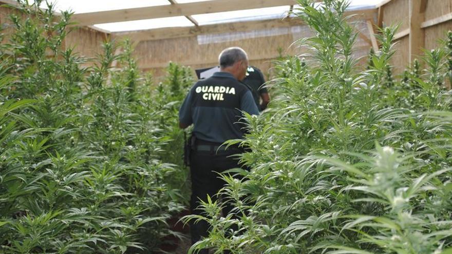 Un agente donde se localizó la plantación de marihuana, en Fasnia.