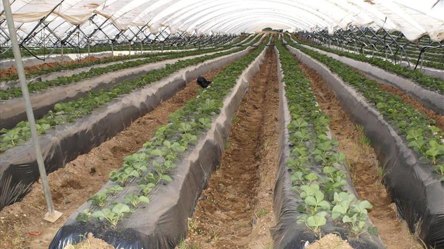 El ingreso agrícola real por trabajador en España aumentó un 3,8 % en 2015