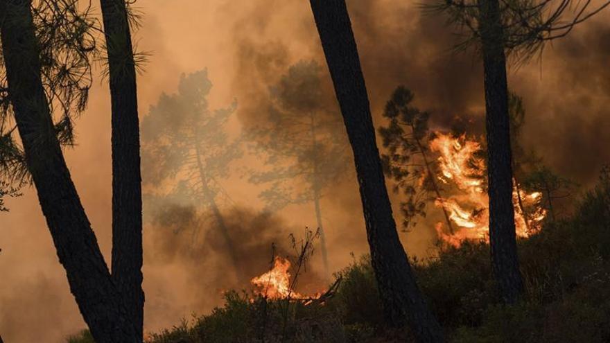 Avanza por tercer día consecutivo el fuego en Sertã, en el centro de Portugal