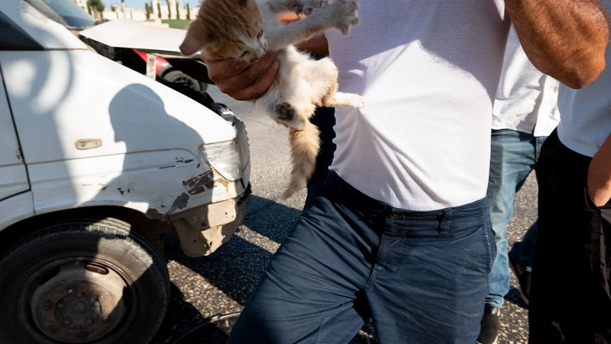 Gatito en las manos de un veterinario de Palestina