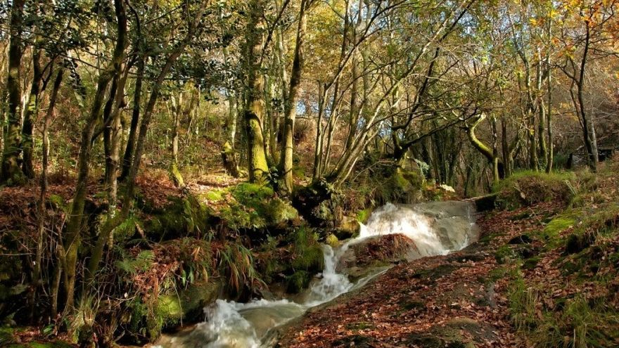 Monte de Froxán, en el concello coruñés de Lousame