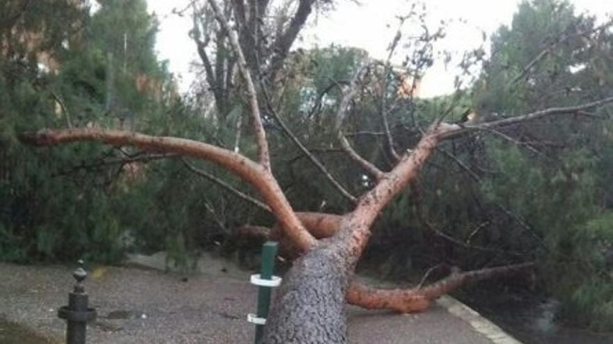 Árbol caído en Toledo, este jueves