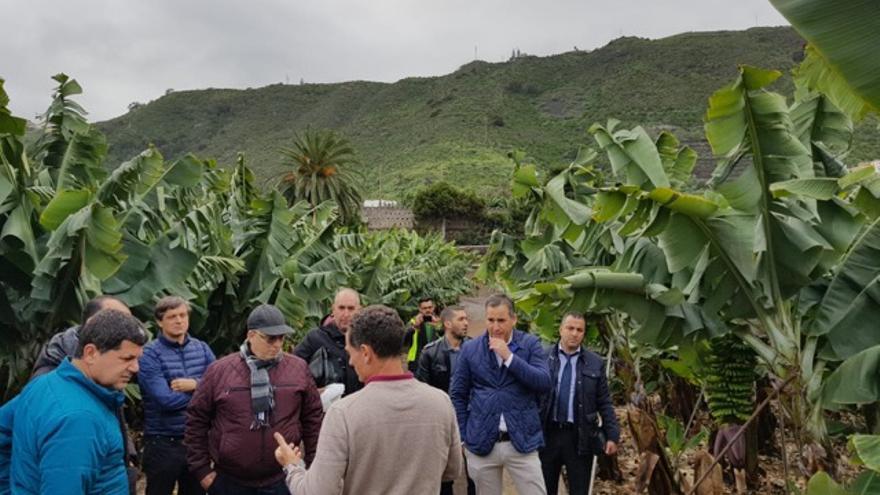 Un momento de la visita de una  delegación marroquí para conocer de primera mano el cultivo de plátano de Canarias.