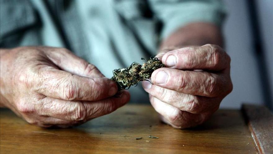 El consumo de cannabis potente, ligado a uno de cada cuatro casos de psicosis