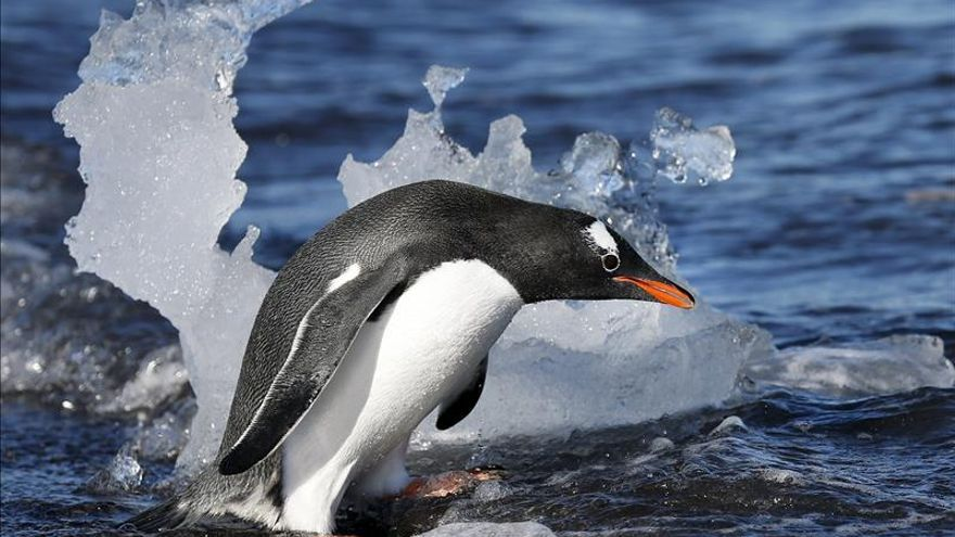 China comienza su estudio más extenso de aguas marinas en la Antártida