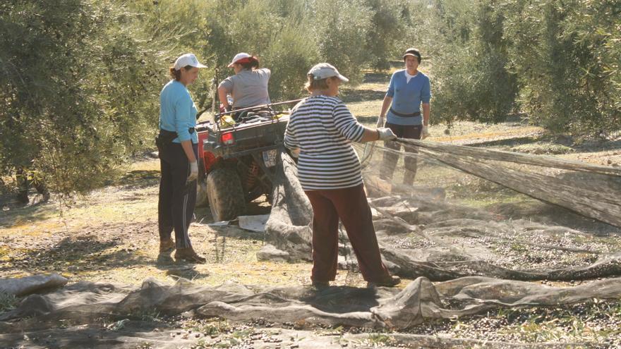 Mujeres trabajando durante la campaña de recogida de aceituna.