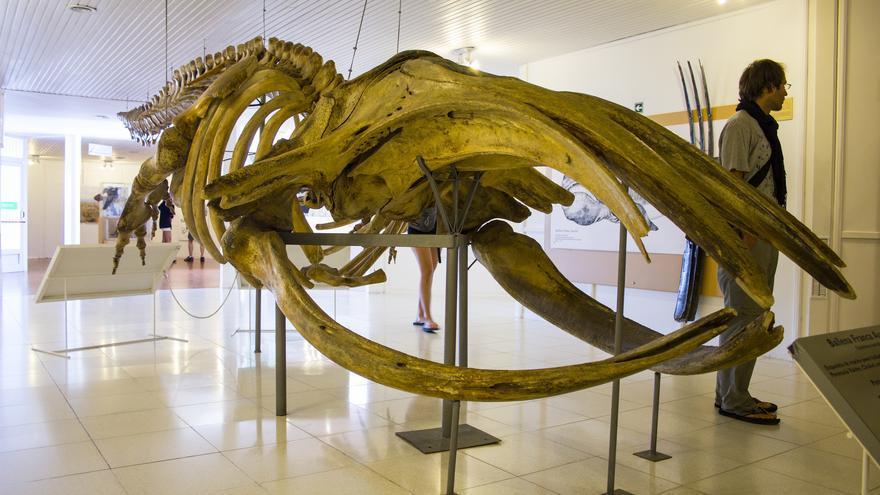 Esqueleto de Ballena Franca en el Centro de Interpretación del Parque Nacional.