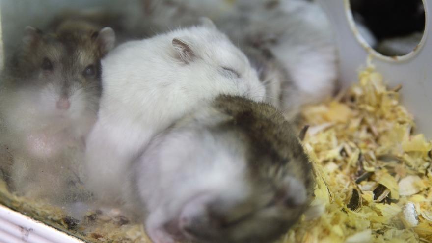 La UC se suma al Acuerdo de Transparencia sobre el uso de animales de experimentación científica