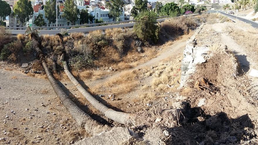 Dos ejemplares de palmera caen en el barrio de San Nicolás