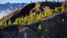 En imagen, un tramo de la Ruta de Los Volcanes, en El Paso.