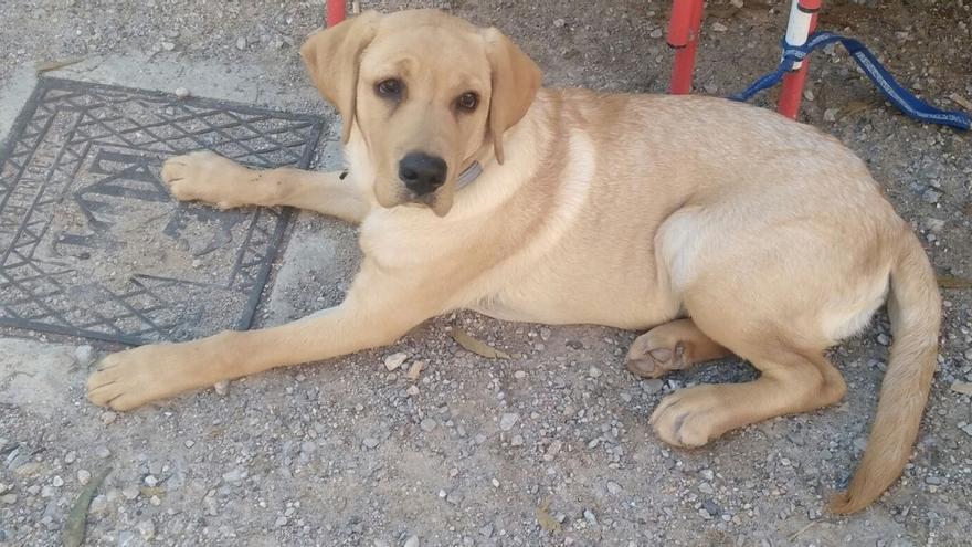 Junta detecta 191 infracciones por incumplimiento de la normativa sobre animales de compañía en lo que va de año