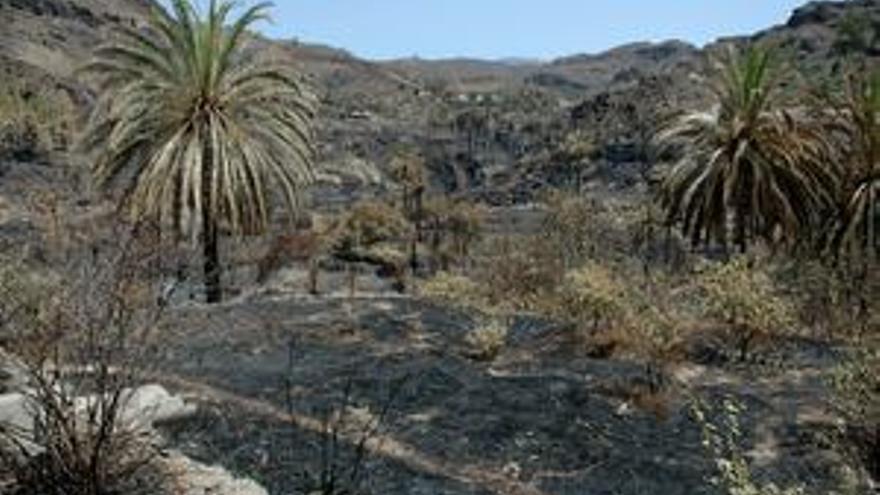 Imagen de Fataga tras el incendio de 2007.