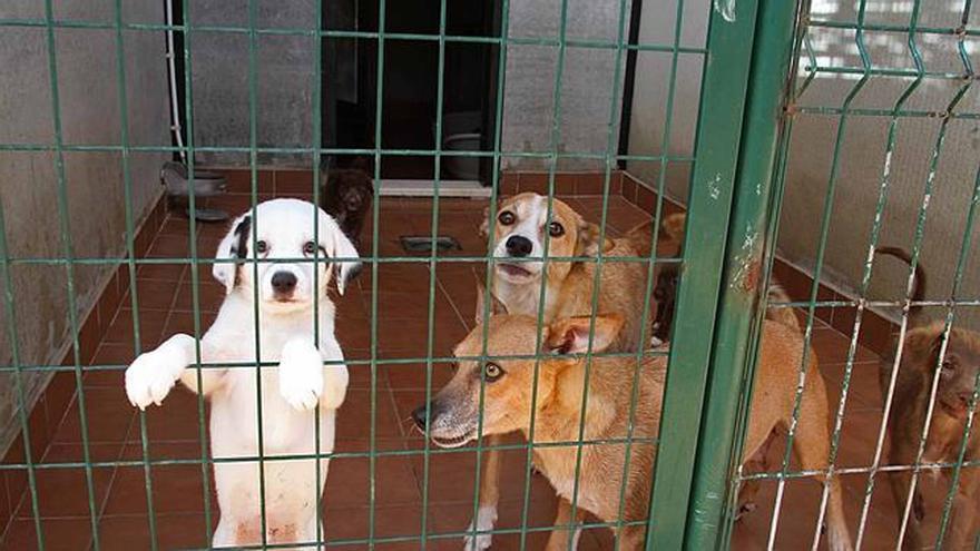 Protectoras se unen en una federación para tener más fuerza en la defensa de los derechos de los animales