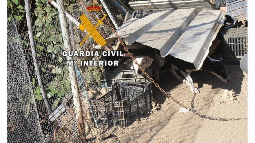 Rescatan a 38 perros e investigan a tres personas por delitos de abandono de animales en la Axarquía