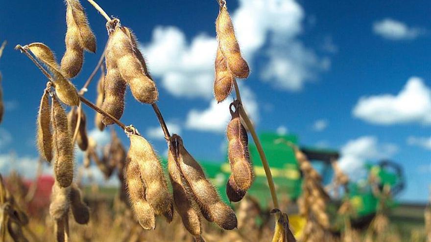 Argentina suspende por seis meses la baja de impuestos a productos de la soja