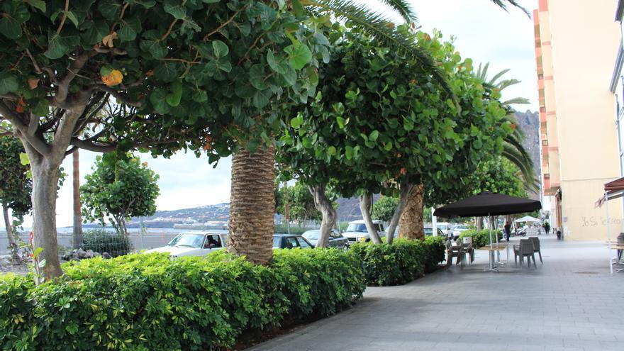 Jardines de la Avenida Marítima de Santa Cruz de La Palma.