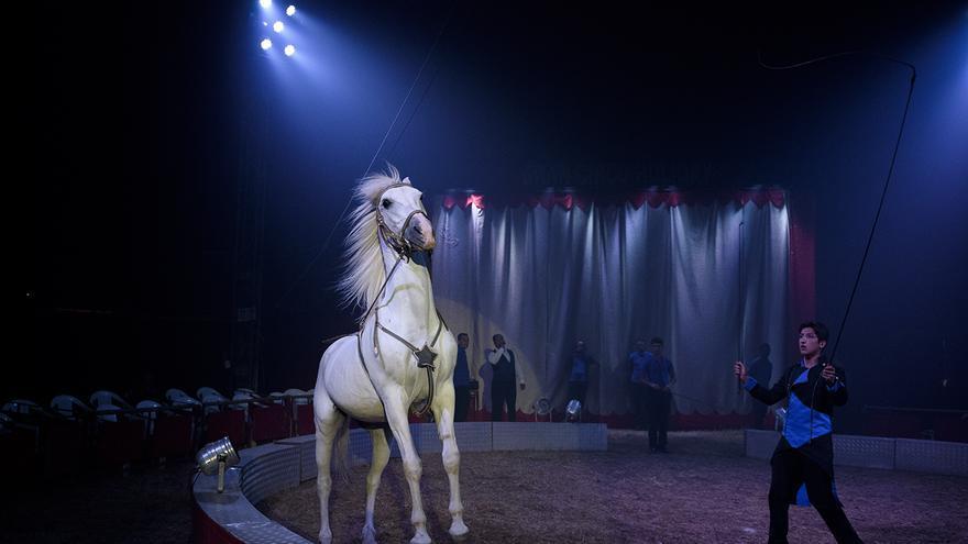 Caballo en el Circo Holiday, en 2016. Foto: Tras los Muros