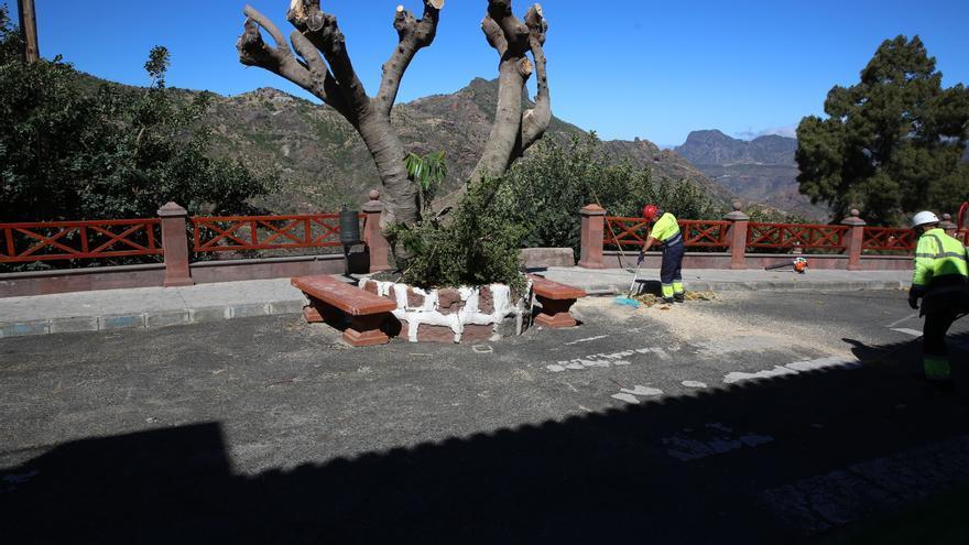 Obreros trabajando en la retirada de árboles. (Alejandro Ramos).