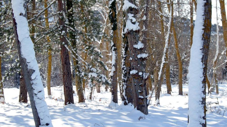 Activado el aviso amarillo por nevadas a 300 metros el lunes y martes en el interior de Euskadi