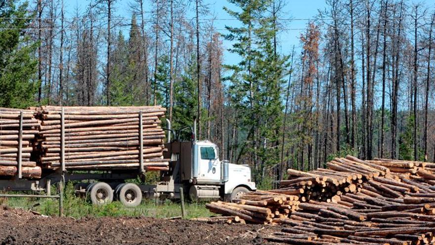 Interpol: la corrupción forestal cuesta 29.000 millones de dólares anuales