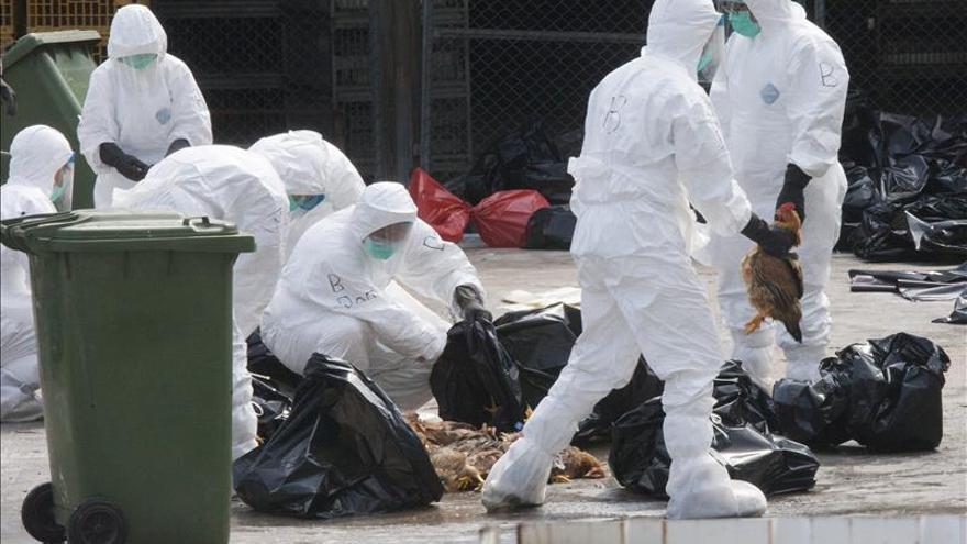 Aves migratorias habrían introducido la gripe aviar en Europa, según la OMS