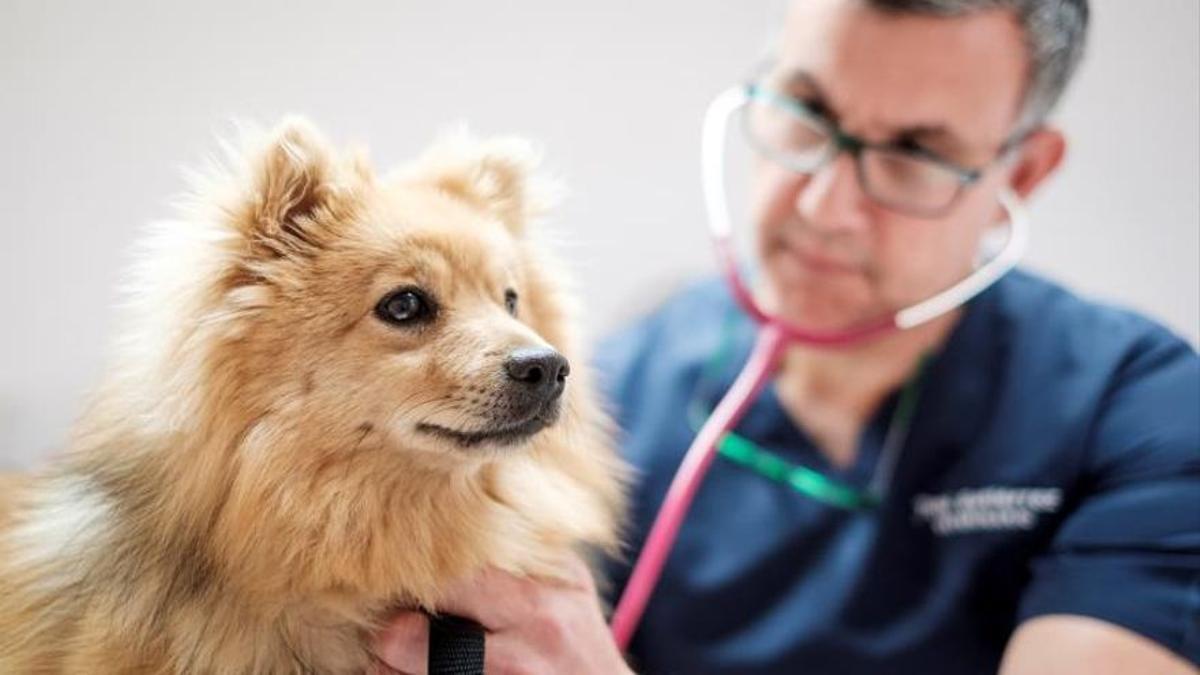 Un veterinario atiende a un perro en una clínica de Las Palmas de Gran Canaria