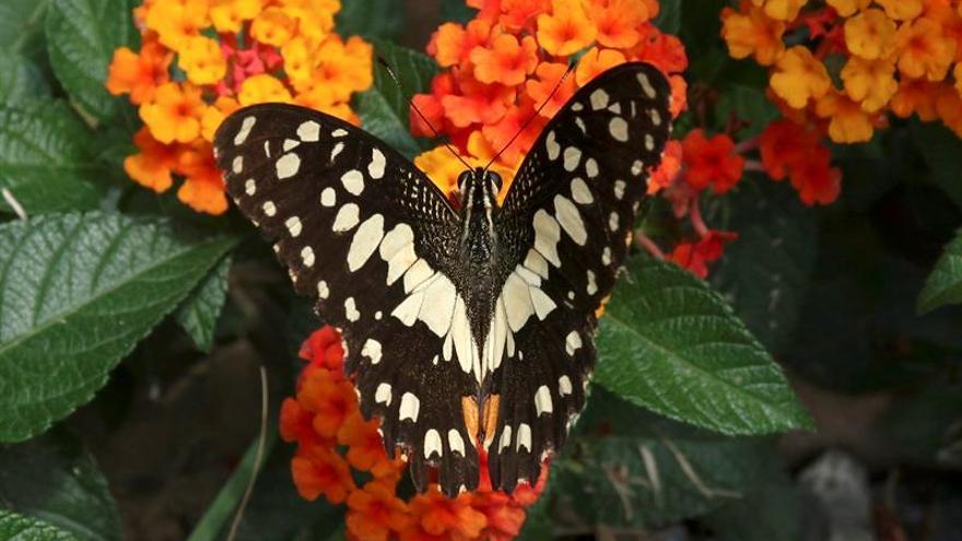 Las flores y las mariposas ya no aparecen a la vez debido al cambio climático