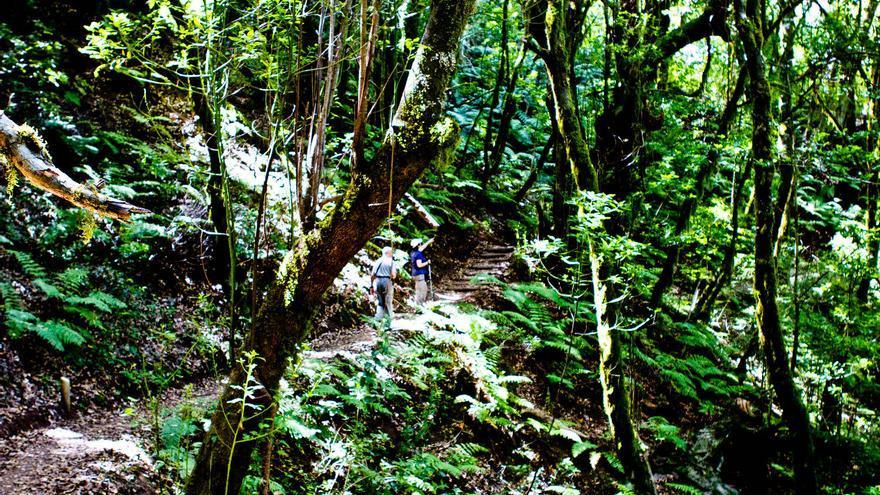 Senderistas en las profundidades del Bosque del Cedro, en Garajonay. VIAJAR AHORA