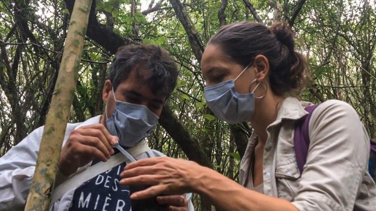 Estudian casos de fiebre amarilla en monos, cerca de misiones.