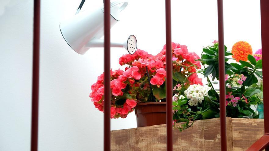 La primavera desde los balcones de la gente confinada en sus casas.