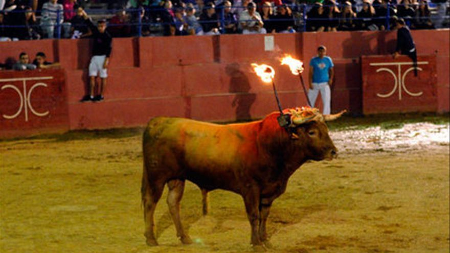 Toro de Ronda de Cariñena. Foto: PACMA