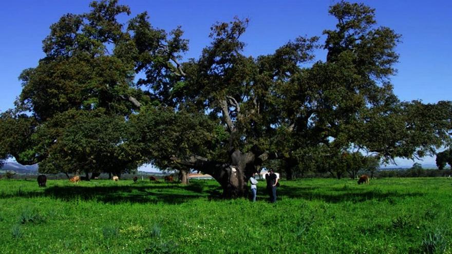 Ecologistas en Acción presenta alegaciones a la nueva Ley de Evaluación Ambiental