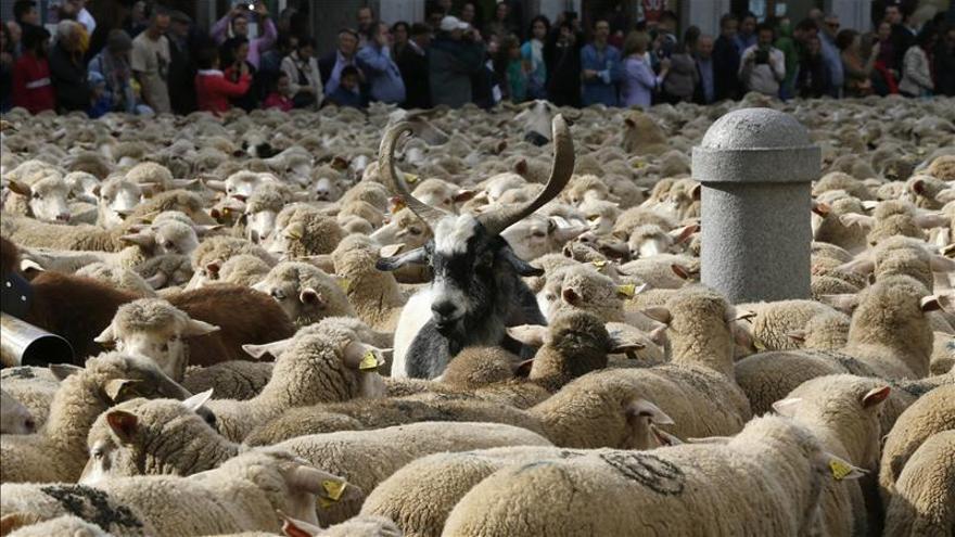 Dos mil ovejas para reivindicar la Trashumancia en el centro de Madrid