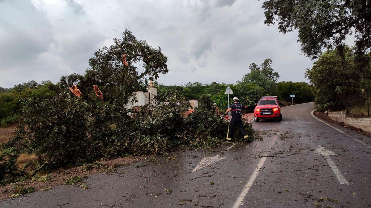 Un árbol caído tras la tormenta en la carretera hacia el Santuario de la Virgen de Linares en Córdoba capital.