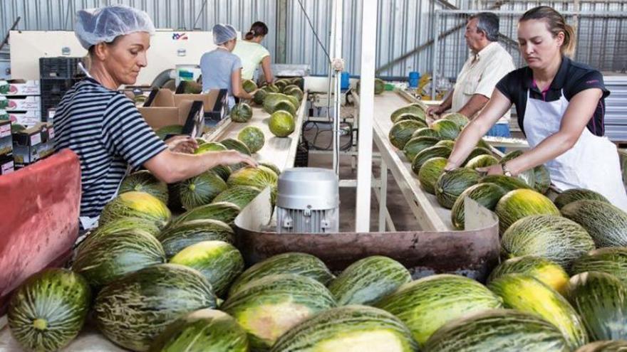 La campaña de melón acaba de terminar en Castilla-La Mancha