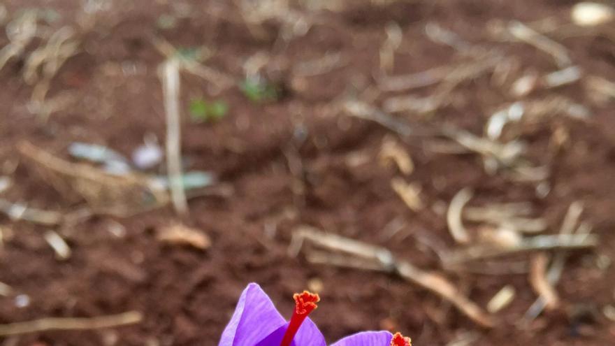 Flor de Azahar en Motilla del Palancar
