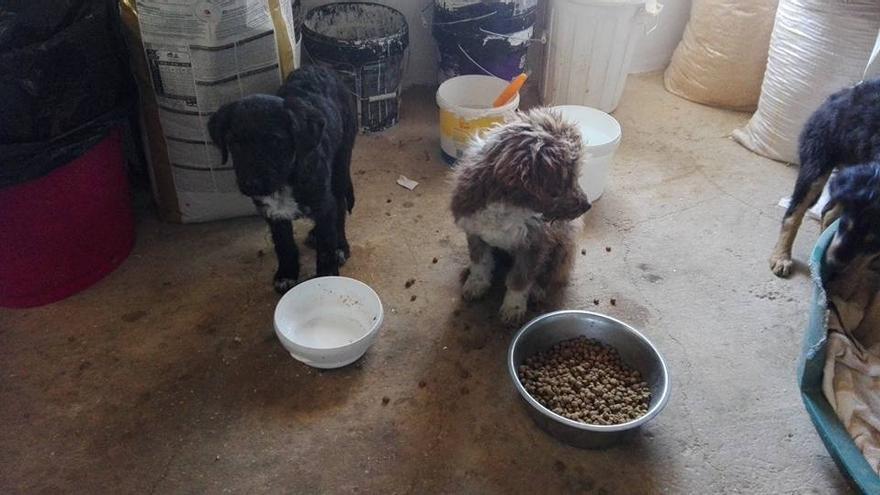 Perros en la protectora de Argamasilla de Alba