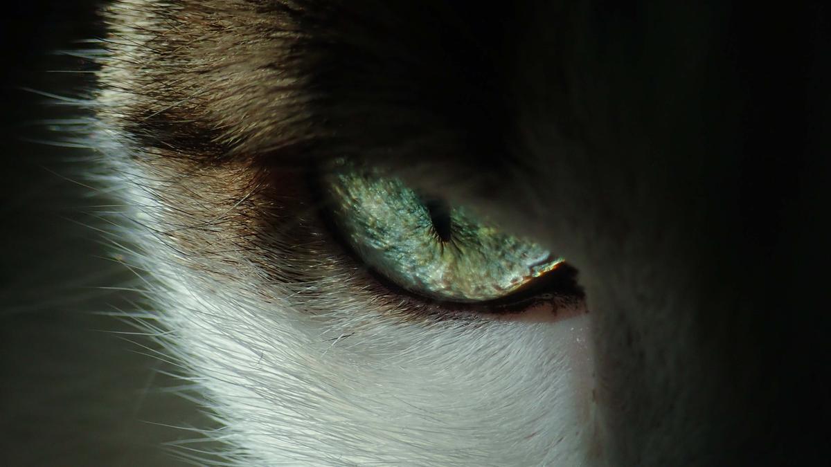 La mirada fija de un gato