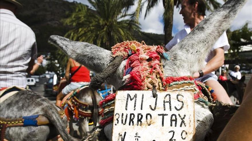 PACMA recoge 6.000 firmas para acabar con los burro-taxis de Mijas (Málaga)